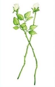 plant eilidh